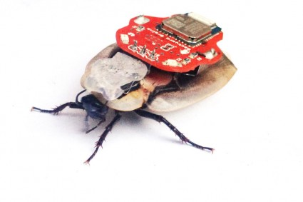 photo of RoboRoach with attached circuit board