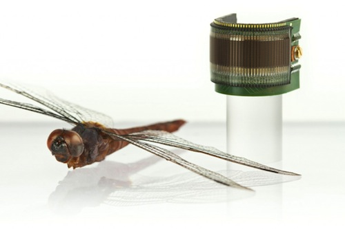 photo of CurvACE shown with dragonfly